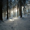 AC_CenB_omgeving_bos